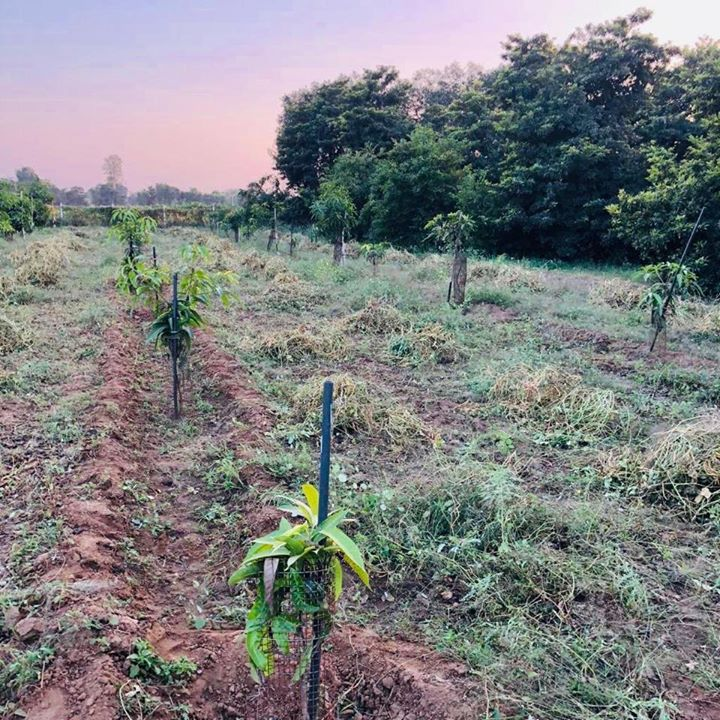 We are blessed with this cultivable land of our grandfathers, where we are planting and connecting our generation and next to the soil, the local food and nutrition. #localfood #planting #farm #tatosan #land #eatlocal #organic #fruits #farming