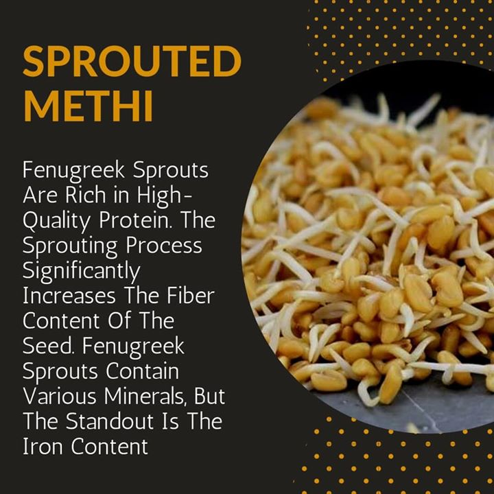 Fenugreek sprouts contain various nutrients but are particularly rich in fiber, protein and iron.  Bring on the Fiber.  Rich in Iron.  Contains High Quality Protein. #fenugreek #sprouts #fenugreeksprouts #fiber #protein #iron