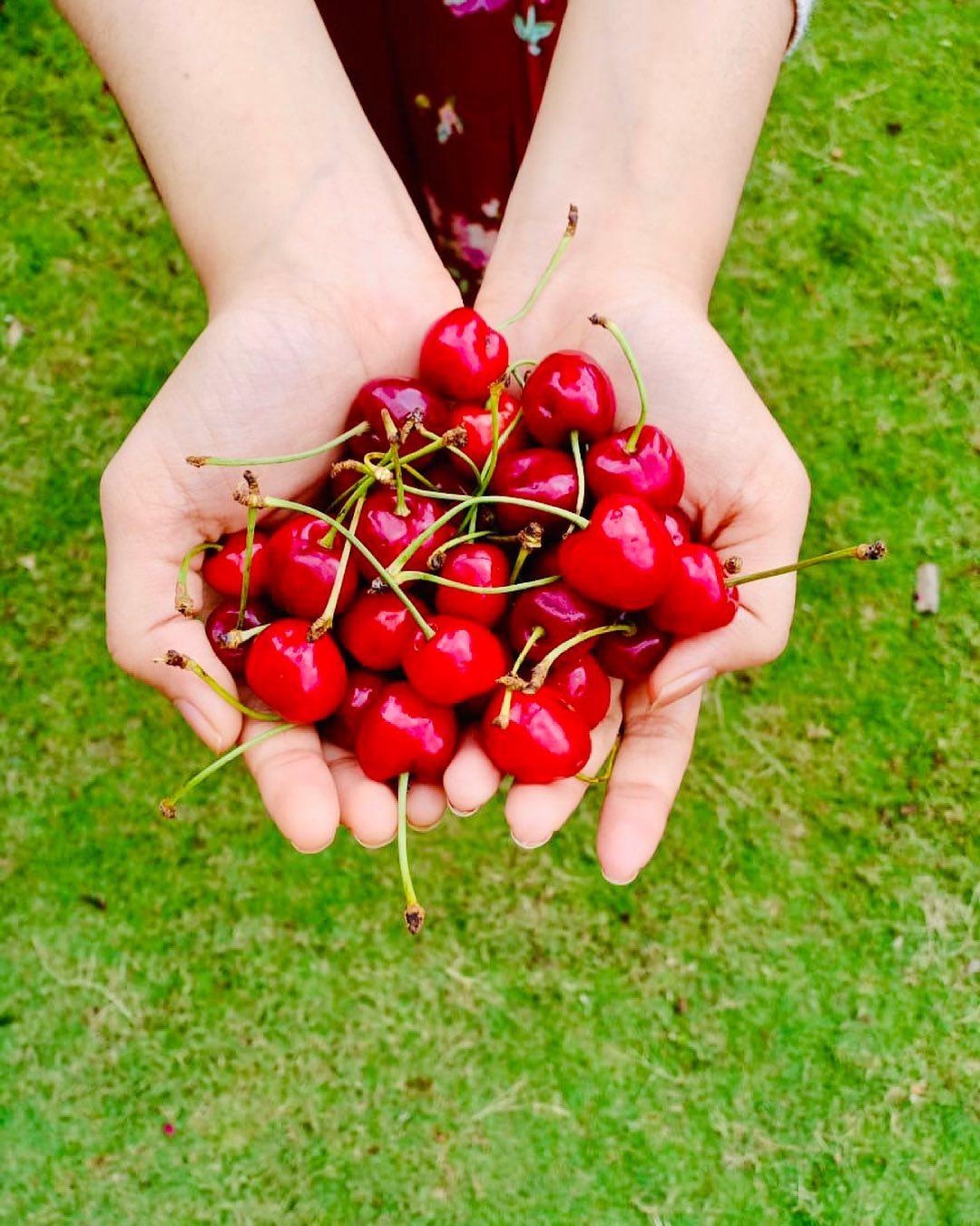 Komal Patel,  cherry, cherries🍒, cherries, hearthealth, antioxidants, vitamin, immunity, immunitybooster, immunitysupport, dietitian, komalpatel, dietitianeats, nutrionist